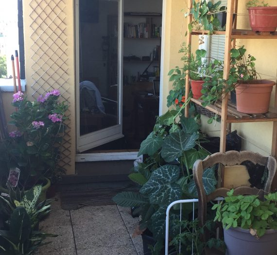 Mini potager : quels légumes planter sur votre balcon?