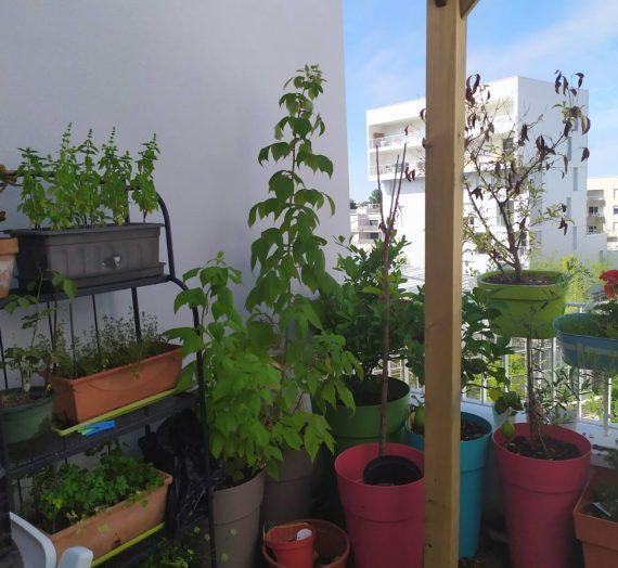 Comment faire votre mini potager sur votre balcon ?