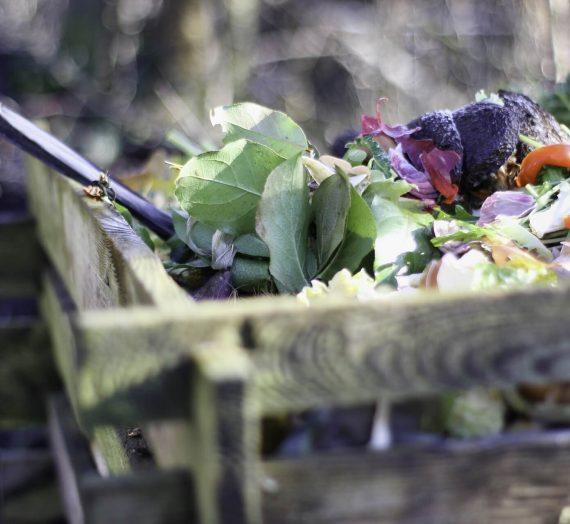 7 choses à savoir sur le compost en appartement