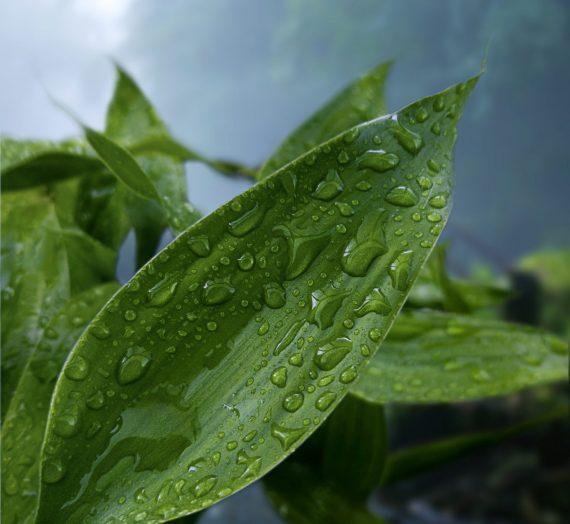 Comment récupérer l'eau de pluie sur un balcon?