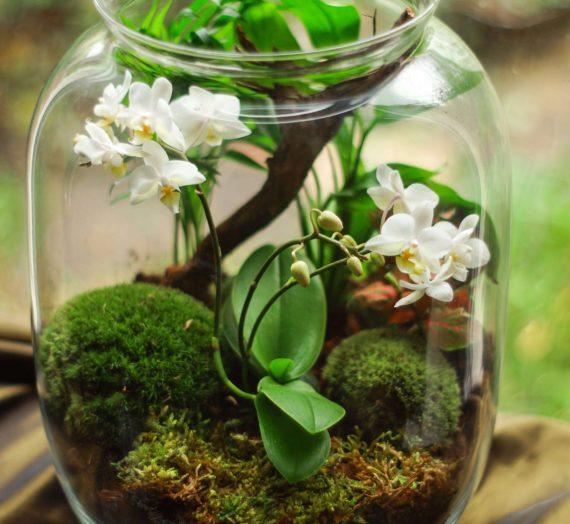 Bien choisir sa serre pour orchidées