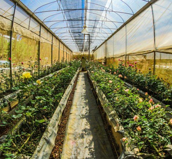 Comment organiser une serre de jardin ?