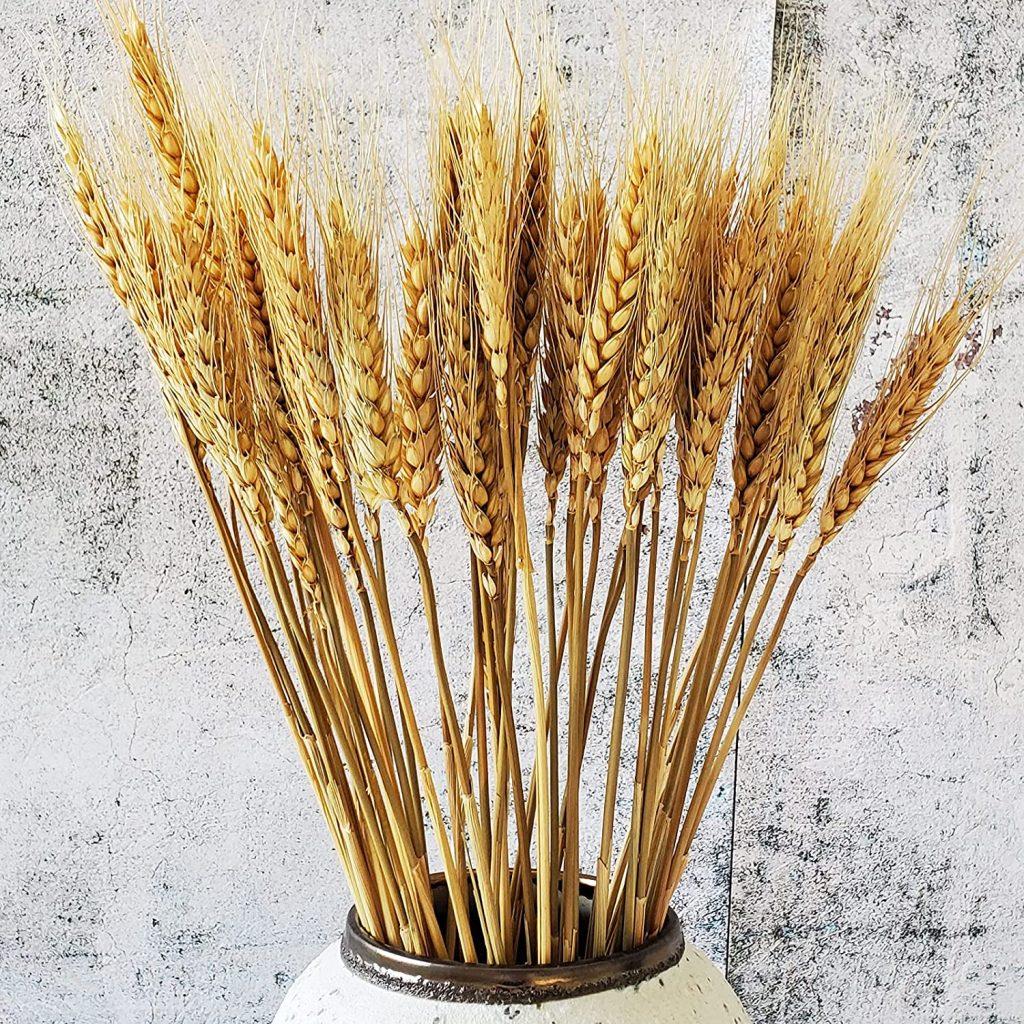 blé bouquet fleurs séché